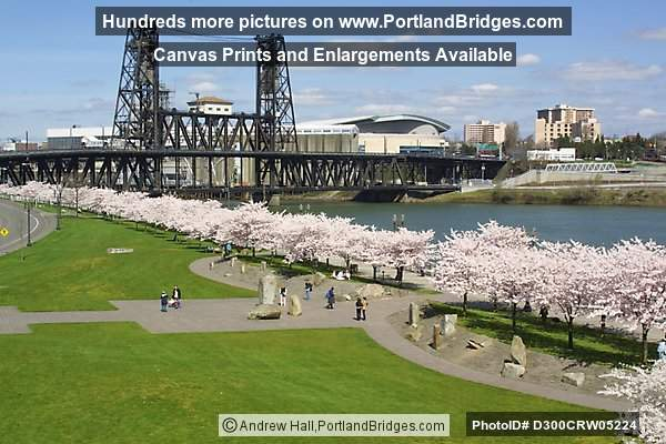 Steel Bridge and Cherry Blossoms (Portland, Oregon)