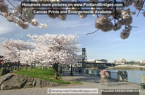 Waterfront Blossoms, Portland Riverfront